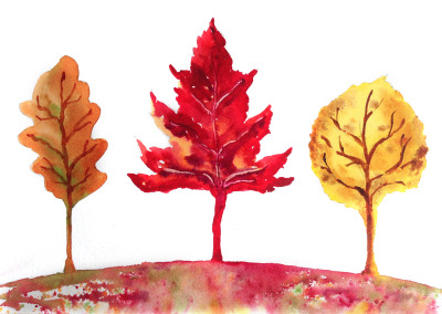 Fall Leaf Trees